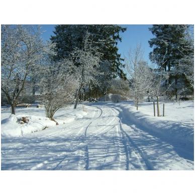 Imuniteto stiprinimas žiemos laikotarpiu